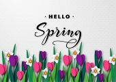 Hello Spring Seasonal Greeting Banner. 3d Paper Cut Spring Flowers Tulips And Narcissus On White Spo poster