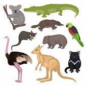 Set Of Australian Animals And Birds. Wild Creatures. Fauna Theme. Detailed Vector Elements For Zoolo poster
