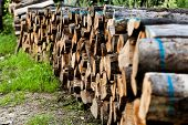 Stack Of Raw Wooden Lumber On The Grass By The Forest. Industry Concept With Lumberyard And Wood. Pi poster
