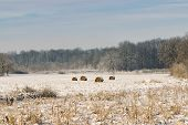 Countryside Landscape In Winter. Winter In Countryside Fields. Hayricks In Winter Fields. Countrysid poster