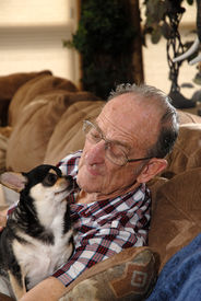 stock photo of older men  - A Senior Man Enjoying an Afternoon with his Dog - JPG