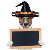 stock photo of placeholder  - halloween placeholder banner dog with witch hat - JPG