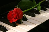 pic of musical instruments  - red rose on top of organ - JPG