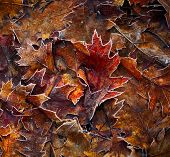 pic of photosynthesis  - Autumn leaves background - JPG