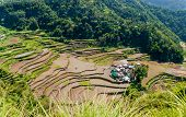 image of luzon  - overlooking the rice-terraces and village of Banga-An Luzon Philippines