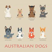 picture of cattle dog  - Set of australian dogs eps10 vector format - JPG