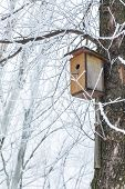 picture of nesting box  - Nesting box under snow during the winter - JPG