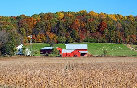 image of barn house  - rural Amish farm with red barns and white house in autumn - JPG