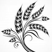 picture of ear  - Stylized ears of wheat in black on white vector illustration - JPG