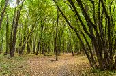 foto of leafy  - Dirt track in the green leafy forest - JPG