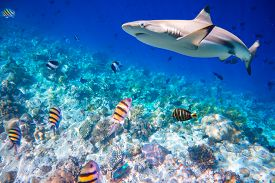 stock photo of aquatic animals  - Reef with a variety of hard and soft corals and shark in the background - JPG