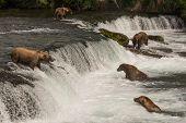 Постер, плакат: Five Bears Salmon Fishing At Brooks Falls