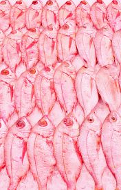stock photo of red snapper  - Red snapper fish at fishmongers in neat rows lines on ice - JPG