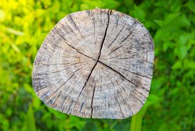 picture of disafforestation  - Tree stump on fresh spring green grass - JPG