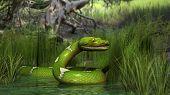 foto of green tree python  - green python in jungle - JPG