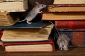 Close-up Two Young Mice On  The Old Books On The Shelf In The Library. Concept Of Rodent Control. Sm poster