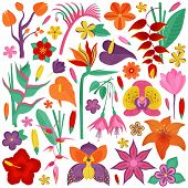 Tropical Rainforest Flower Set. Cartoon Exotic Flowers And Floral Branches With Leaves. Botanical Il poster