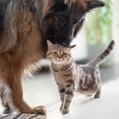 Cat and dog together indoors. Friendship between pets. poster