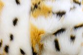 Fashion fur. Artificial color fur poster