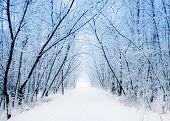 image of snowy-road  - Winter - JPG