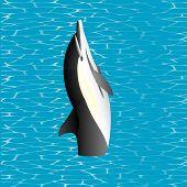 stock photo of orca  - Killer Whale - JPG