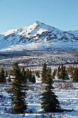 image of denali national park  - Late spring snow dusts the forests and mountains of Denali National Park - JPG