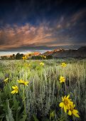pic of blacktail  - Sunflowers at dawn at Blacktail Ponds Overlook in Grand Teton National park WY - JPG