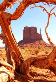 foto of bute  - Tree framing a bute at monument valley - JPG