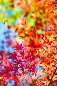 stock photo of pastel colors  - Beautiful transitions of colors of autumn - JPG