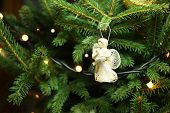picture of christmas angel  - Christmas angel on christmas tree branch lights hanging in a tree - JPG