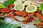 stock photo of cooked crab  - some raw velvet crabs on crushed ice - JPG