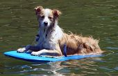 pic of boogie board  - a dog on a boogie board at pauanui waterways on a summer holiday  - JPG