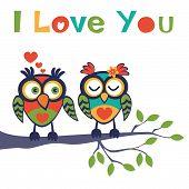 Постер, плакат: Love owls