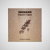 picture of oregano  - Herbs and Spices Collection  - JPG