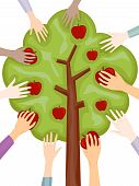 pic of apple tree  - An Illustration Of Hands Picking Apples with Clipping Path - JPG