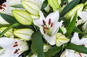 pic of white lily  - Colorful bush of White lily flowers  - JPG