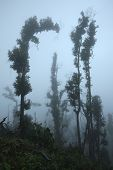 stock photo of gunung  - Tropical forest destroyed by volcanic eruption on the slopes of Mount Merapi  - JPG