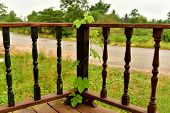 image of ivy  - ivy Trees grow  On Wooden wall in the morning - JPG