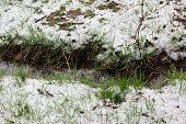 stock photo of spring-weather  - Spring snow cloudy weather nature disaster plant - JPG