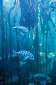 foto of algae  - Fish swimming in a tank with algae at the aquarium - JPG