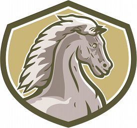 pic of colt  - Illustration of a colt horse head viewed from the side set inside shield crest on isolated background done in retro style - JPG