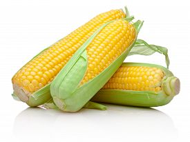 stock photo of sweet-corn  - Three corn cob isolated on a white background - JPG