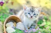 Kitten In The Garden With Flowers On Background poster