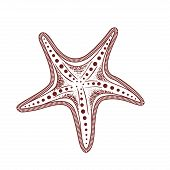 Cute Starfish Isolated Icon Vector Illustration Design poster