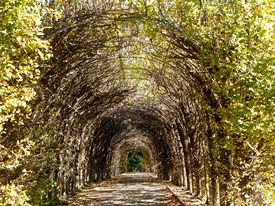 pic of crip  - Twigs and branches make up this natural archway in a crips fall day - JPG