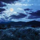 stock photo of moon-flower  - high wild grass and flowers on hillside near the village at mountain foot at night in full moon light - JPG
