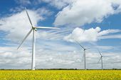 stock photo of rape-seed  - Group Of Wind Turbines In Field Of Oil Seed Rape - JPG