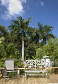 pic of greater antilles  - Some tropical trees of Puerto Rico and outdoor chairs - JPG