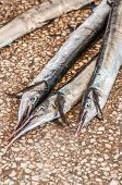 picture of barracuda  - Barracuda fresh from the ocean up for sale at the fish market in Stonetown Zanzibar - JPG