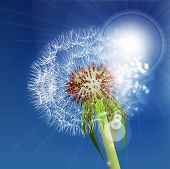 stock photo of wind blown  - Dandelion seeds blown in the blue sky - JPG